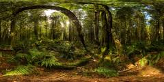 Rainforest V Panorama