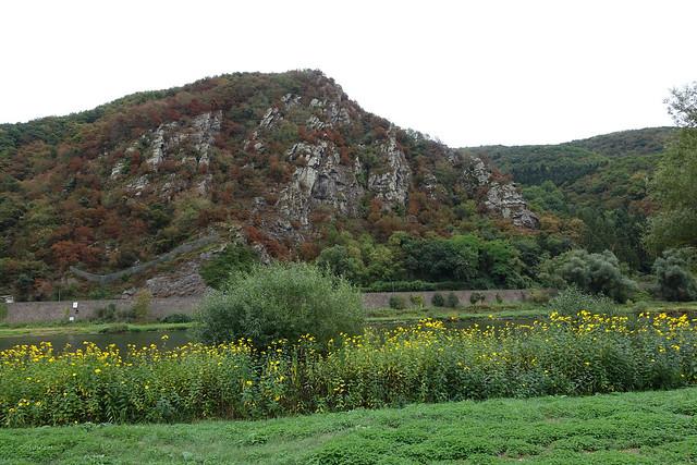 gelbe Blumen und der Druidenstein gegenüber von Moselkern