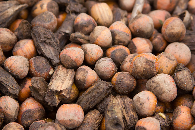 Are Filbert Nuts Good For You Can Dogs Eat Them