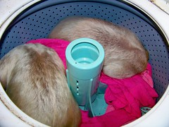 Pua & Aurora sleeping in the washer