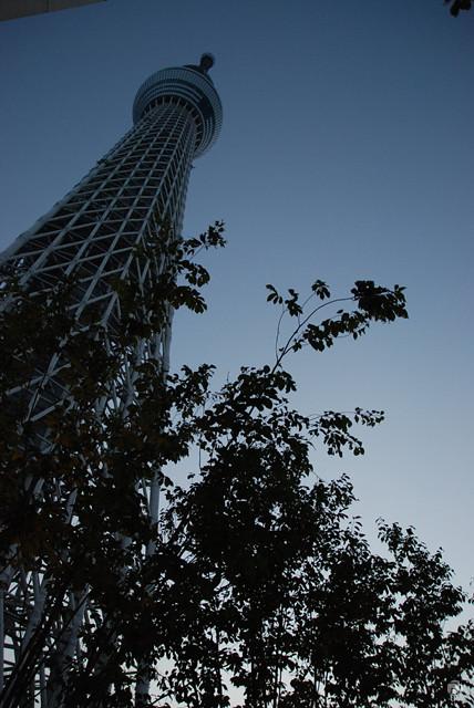 photo439