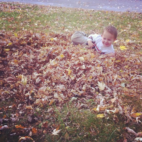 Discovering leaves.