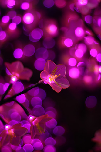 Electric blossom bokeh
