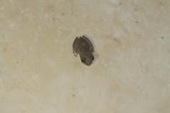 Tiny Frog!