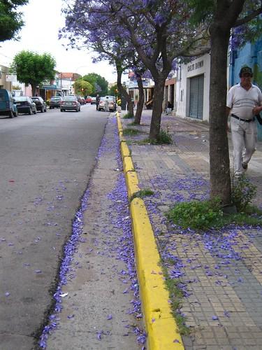 jacarandáes de Urquiza