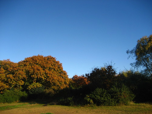 Autumn colours in Epping Forest