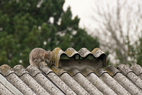 cat on the roof - KW46