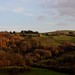 Small photo of Autumn in Delves.tif