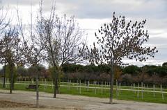 Parque Juan Carlos I - I
