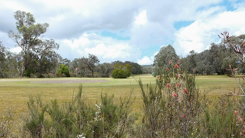 golf wildflowers buchan abctv 16x9 x100 16x9widescreen abcweather