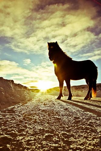 road blue sunset sky horse snow silhouette sunrise iceland sunrays countryroad eyjafjordur akureyri eyjafjörður sunflare snjór ský icelandichorse fjall fotolinda fotolind
