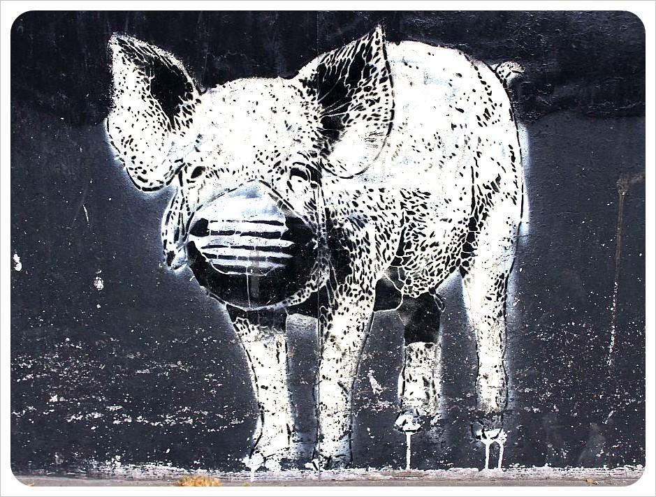 buenos aires street art pig