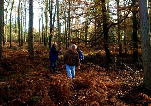 brian_woods2_1000