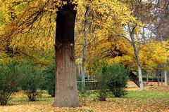 Jardines de Aranjuez en otoño