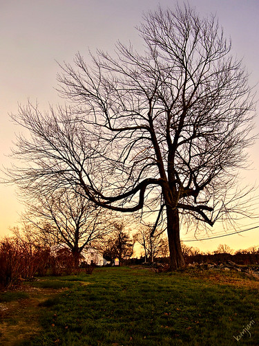 sunset landscape evening thanksgivingday baretree earlyevening fantasticnature supershots glastonburyct southglastonburyct stormscloudssunsetssunrises