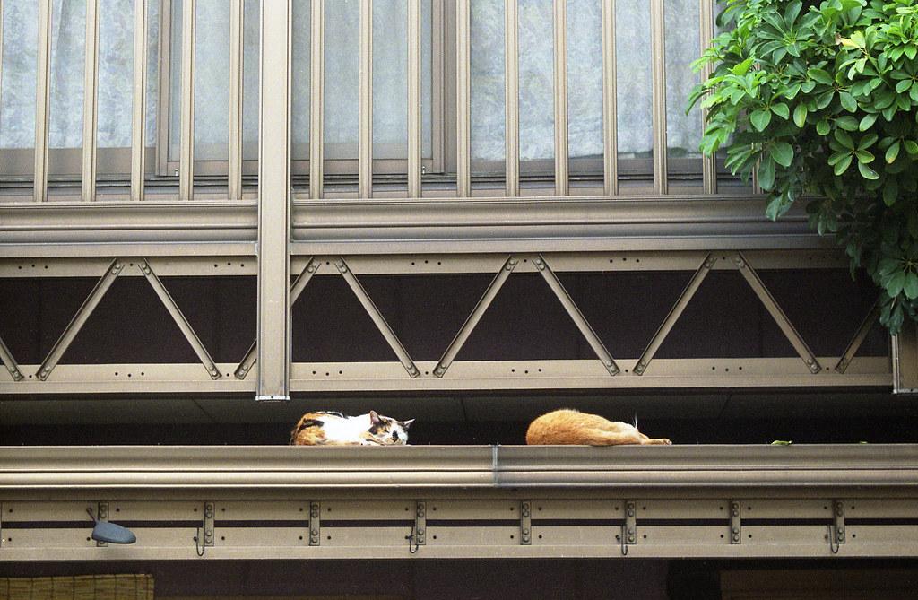 2012年夏・猫