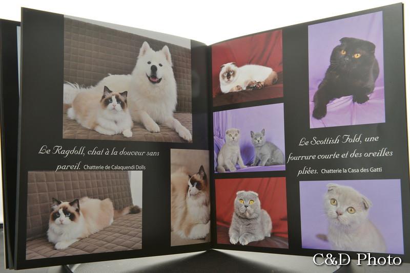 Chats Ragdoll et chats Persans du livre sur les Chats de Race de Cnd Photo