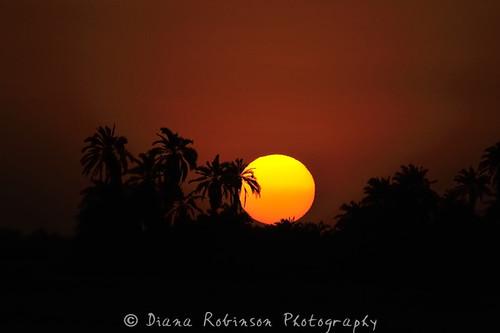 sunset sun kenya eastafrica amboselinationalpark oltukailodge dianarobinson sunsetwithpalmtrees nikond3s largesettingsun