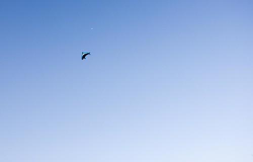 飛んでいくイルカ