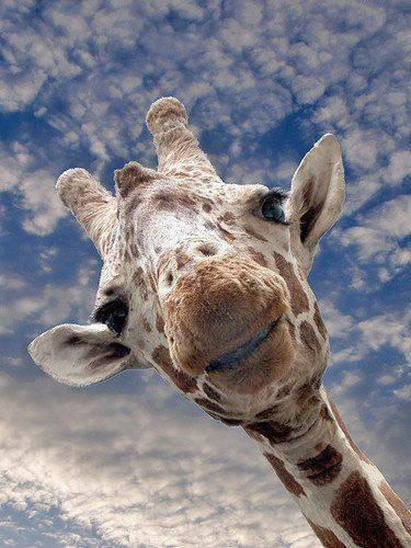 giraffe sky shared on FB by Dawn
