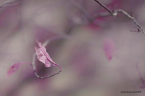 Susurro de otoño