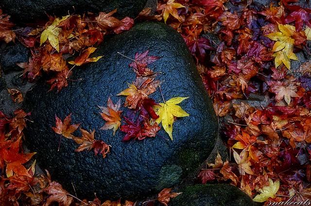 「濡れ落ち葉」 室生寺 - 奈良