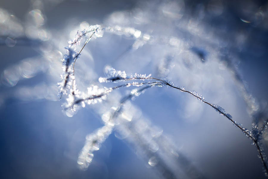 Winter is here (macro) 3/8