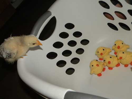 Chick photo 2