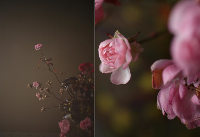 december_roses