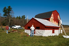 Woodmont Orchard - Gambrel barn, getting new paint
