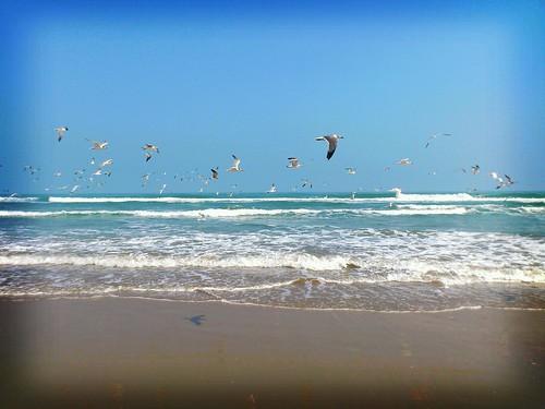 sky mar sonyericsson playa aves nubes olas volando xperia xperianeo flickrandroidapp:filter=berlin