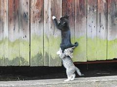 lifting kitties