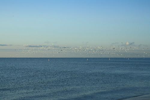 seagulls sunrise lakeerie michigan monroe monroecounty sterlingstatepark notthe80sband