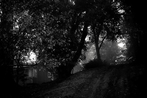 california trees blackandwhite bw house home fog lights dusk hill losgatos outtake canyouhaveanouttakewithalandscape oristhisjustfromthebreel