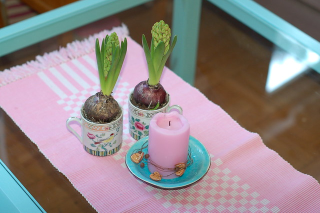 Hyacinth bulbs in coffee mugs