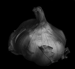 Garlic Shapes And Shadows