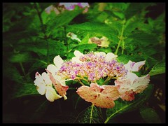 It was the circle of bracts around the flowers that caught my eye:heart:️