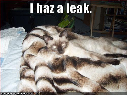 leaky siamese