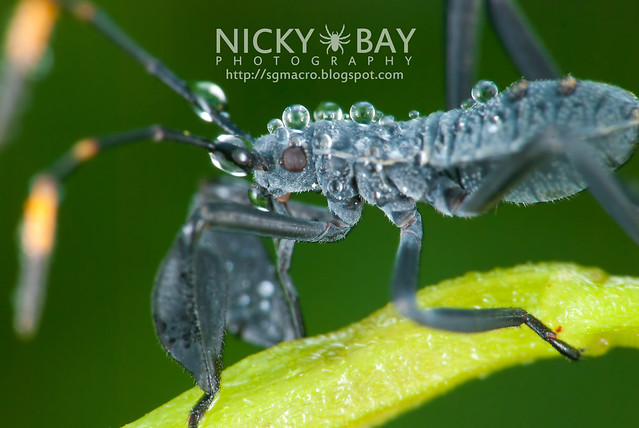Leaf Footed Bug? - DSC_5486