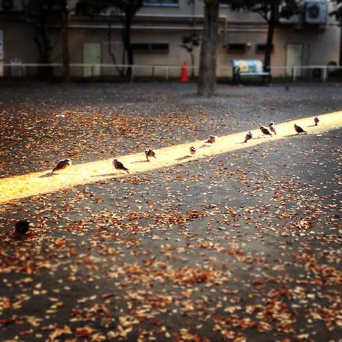 日向ぼっこする鳩たち