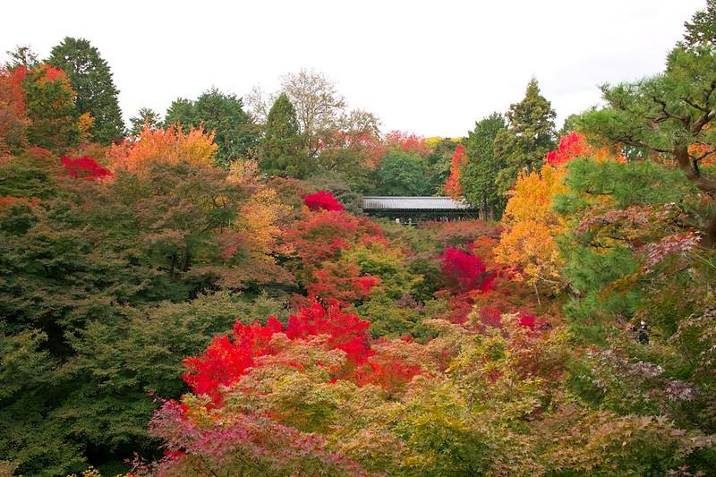 東福寺 #3