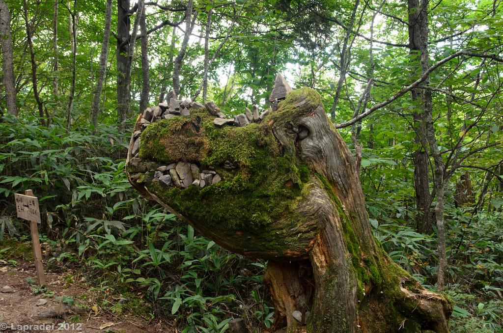20120915 ゴジラみたいな木