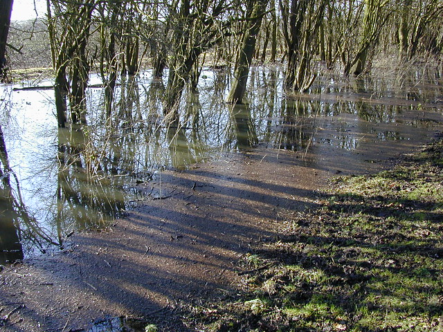 Dscn2413-flooded-trees-sidelight