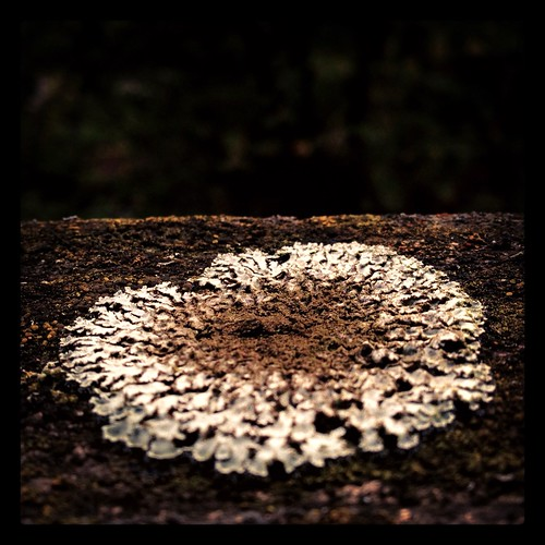 ritualcircle by Nature Morte