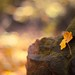 "HBW! ""the story of the rock and the leaf"" by icemanphotos"