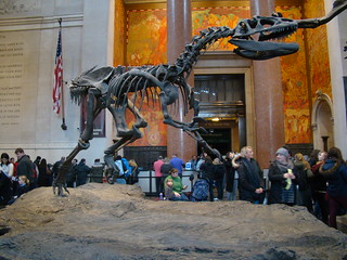 A visit to American Museum of Natural History - Things to do in New York City