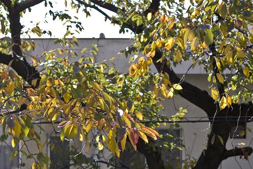 秋の終わり (1)