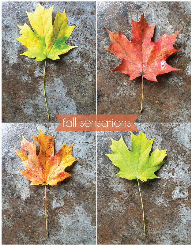 FALL-sensations