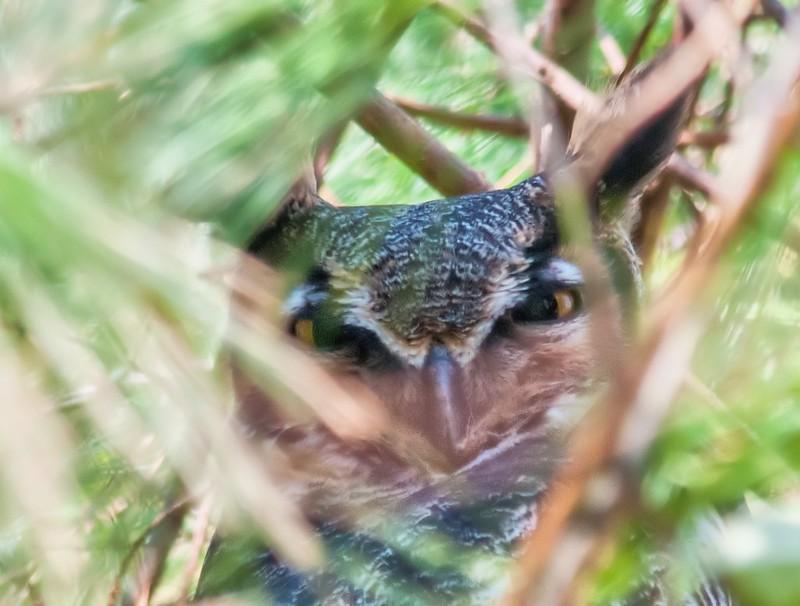Peek-a-boo GHO