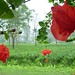 Abali Garden A.P.
